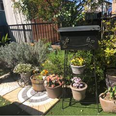 人工芝/ガーデニング雑貨/お花/ガーデニング/DIY/おうち自慢 お庭にお花が増えて春らしくなりました(*…