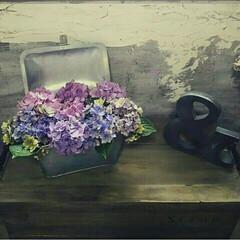インテリア/花/グリーン/ブリキ/DIY/トランク/... ブリキのトランクBOXに花を生けています…