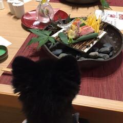 可愛い/わんこ同好会/乃の風リゾート しるば と一緒に食事。向かえ側にピッポい…