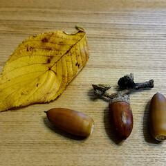 秋/ドングリ/落ち葉/季節 秋ですね…(*´▽`*) 拾ってきたドン…