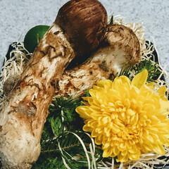 秋/松茸/食欲の秋/松茸ご飯/お吸い物/土瓶蒸し/... 秋といえばやはりこれですかね? 一度は食…