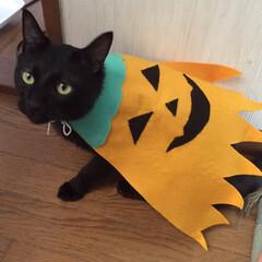 黒猫/ザクロ/ハロウィン2019/ハンドメイド ハロウィン🎃マント  娘がつくってくれま…