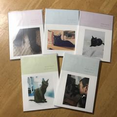 ザクロ/セルフアルバム/トロット/ペット/ペット仲間募集/猫/... ニャンのアルバム(Toloto)   と…