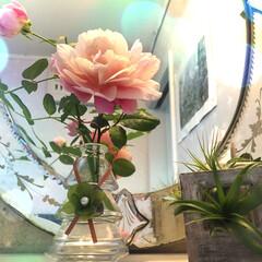 薔薇/一輪挿し/雑貨屋さん 雑貨屋さんの作家展でgetした、ボトルキ…