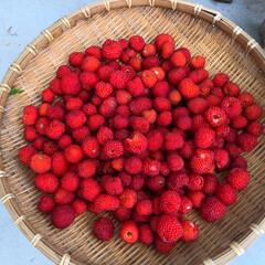 フルーツ/自然食 たくさんの野いちご🍓