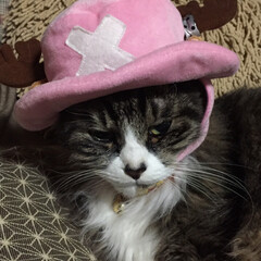 ちょび/アニメシリーズ/あけおめ/ペット/猫/にゃんこ同好会 ん?チョッパー⁉️ とてつもなく不機嫌だ…