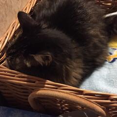 寝たふり/ペット/猫 出かける準備をする私を追いかけ洗面所へ。…