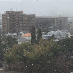 春よ来い/ゆ、雪が〜〜っ!/春の一枚 外が白い…⁈ カーテン開けたら、まぁ大変…(2枚目)
