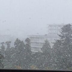 春よ来い/ゆ、雪が〜〜っ!/春の一枚 外が白い…⁈ カーテン開けたら、まぁ大変…