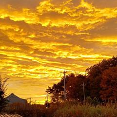 朝焼けの空 ~~~ヾ(^∇^)おはよー♪ 今朝は朝焼…