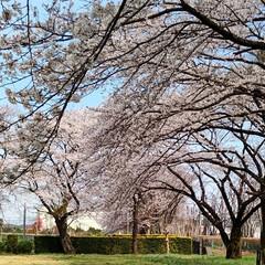 ガーデニング/花のある暮らし/ガーデン雑貨/ガーデニング雑貨/LIMIAガーデニング部/うちのガーデニング/... こんにちはー 今こちらは18.9℃で暖か…(5枚目)