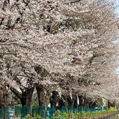 ガーデニング/花のある暮らし/ガーデン雑貨/ガーデニング雑貨/LIMIAガーデニング部/うちのガーデニング/... こんにちはー 今こちらは18.9℃で暖か…(6枚目)
