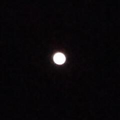 満月 コンバンハ~(≧∇≦) 今日が満月だそう…