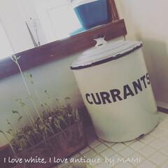 フレンチインテリア/キッチンインテリア/いいねありがとう/フレンチカントリー/ホーロー/キャニスター/... もう1つの『CURRANTS』キャニ♡ …