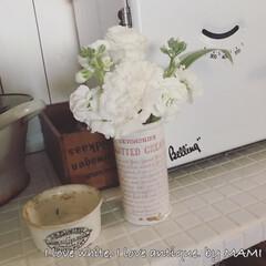 花のある生活/花のある暮らし/お花のある暮らし/お花のある生活/フラワーアレンジメント/いいね♡ありがとうございます/... アンティークの白い陶器瓶、 クロテッドク…
