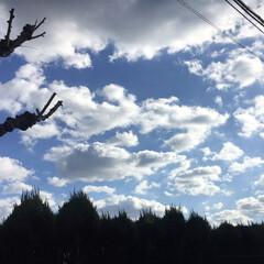 かわいい/きれい/雲/風邪/インフルエンザ/空/... お久しぶりです! 風邪をこじらせて(イン…