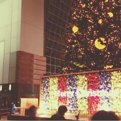 ディナー/クリスマスツリー/イタリアンレストラン/京都タワー/京都駅/美味しい/... 京都・中心地 Part2 京都タワーが見…(3枚目)