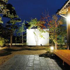 植物/庭園 ライトアップされた夜は、木々たちの幻想的…