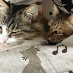 寝起き/ねこ 朝起きたら 横にこんな可愛い子たちがぴっ…