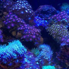 水族館/おでかけ 水族館って癒し。