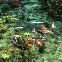 モネの池/岐阜/おでかけ モネの池