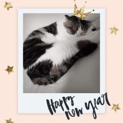 寝正月?/あけおめ/フォロー大歓迎/おうち/ペット/ペット仲間募集/... ゆずさん。 今日も変わらず寝てます。 猫…