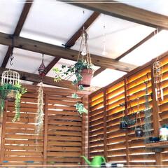 鳥かご/グリーン/DIY/雑貨/100均/住まい/... 今朝は、久々に晴れた気持ちいい朝です☀️…