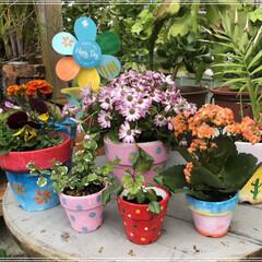 プランター/お花💐/ハンドメイド/100均/住まい この間、投稿したプランターにお花&観葉植…