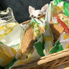わんこ同好会/サンドイッチ/美味しいパン/サブウェイ/テイクアウト/動物/... 自粛中につき DIYウッドデッキでテイク…