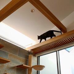 リビング/猫/ねこ/猫と暮らす/猫との暮らし/ねこと暮らす/... 引渡しから数日経ってクライアントご夫妻か…