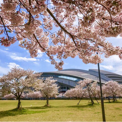 ノエビアスタジアム神戸/公園/芝生/兵庫/神戸/花見/... ちょっと週末のお花見会の下見に🌸 まだイ…