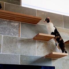 リビング/猫/ねこ/猫と暮らす/猫との暮らし/ねこと暮らす/... 引渡しから数日経ってクライアントご夫妻か…(2枚目)