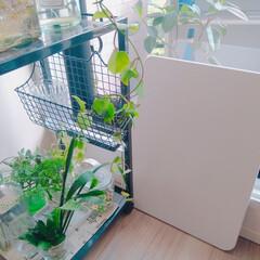 珪藻土バスマット 雲 NIT-002(バスマット)を使ったクチコミ「珪藻土バスマットって 便利で快適ですよね…」