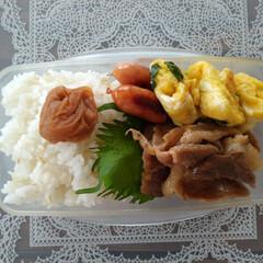 夫弁当/料理/お弁当のおかず/お弁当 お弁当記録です。 ・豚のしょうが焼き ・…