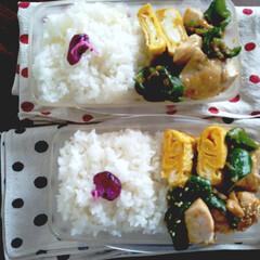 お弁当/弁当記録/薄味/料理/おうちごはん/手作り弁当 お弁当記録 昨日のお弁当🍱 鶏とピーマン…