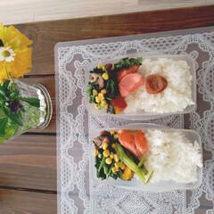 料理/お弁当作り/お弁当/暮らし 今週の(月)(火)(水)のお弁当。 (木…