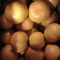 果物/頂き物/みかん🍊/冬/グルメ 頂き物のみかんです🍊 自分家の土地に果樹…