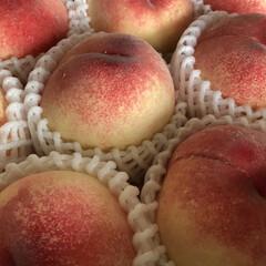 美味しい/果物/頂き物/桃 頂き物の桃です  兄から送られてきました…
