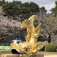 名古屋城/再建/金鯱/お城 本当に久々に名古屋へ用事があり来ました …(1枚目)