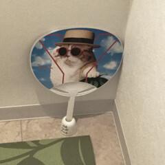 手動扇風機/省エネ/トイレ トイレの手動式扇風機です😄 窓の無いマン…