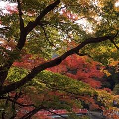 混雑/もみじ/紅葉 今日とても良いお天気で、暖かな日でした☀…
