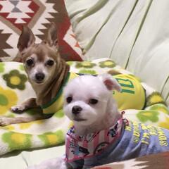 朝寝/仲良く/ペット/犬 今日のワンコです!🐶 最近週末の天気が悪…