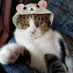 コリラックマ/コスプレ猫/かぶりもの/ガチャガチャ/秋/猫 協力的なのに表情を作るのは苦手なエレナち…