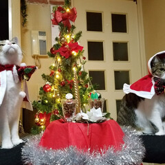 サンタコス/猫服/フォロー大歓迎/ペット/ペット仲間募集/猫/... 早くクリスマスにならないかな~♥️