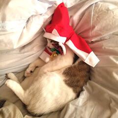 サンタコスプレ/猫服/フォロー大歓迎/ペット/ペット仲間募集/猫/... こんなサンタのマスコットはいかがですか~…