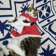 おしゃれ/フォロー大歓迎/ペット/ペット仲間募集/猫/にゃんこ同好会/... ずんぐりむっくり いやいや、ワガママボデ…