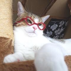 眼鏡男子/眼鏡/秋/ペット/猫/ハンドメイド/... 工作用のキラキラモールを使って作った眼鏡…