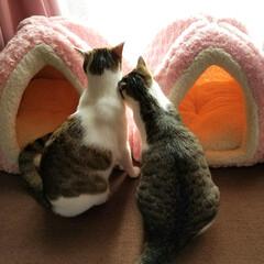 仲良し/ラブラブ/フォロー大歓迎/ペット/猫/ペット仲間募集/... 姉弟だけど 恋人みたいに仲良しなおふたり…