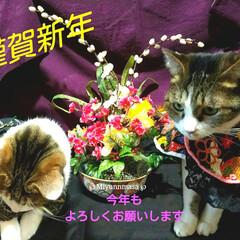 晴れ着/猫服/手作り服/お正月/あけおめ/フォロー大歓迎/... アルトとエレナ ちゃんとご挨拶出来るかな…