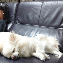 いびき/ペットと暮らす家「house-zoo」/チロル/令和元年フォト投稿キャンペーン 昨日チロルはサンルームの工事に来てくれた…